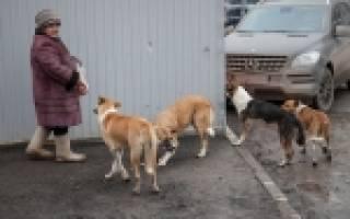 Лучшие питомники собак Челябинска на 2020 год