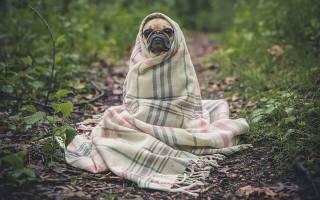 Рейтинг лучших средств от глистов у собак на 2020 год