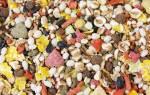 Обзор самых популярных кормов для декоративных крыс 2020 года