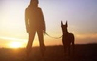 Рейтинг лучших питомников собак в Новосибирске на 2020 год. Топ 10, где можно найти чистокровного щенка