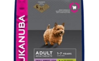 Как выбрать корм для собаки мелкой породы