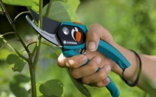 Рейтинг лучших садовых секаторов для обрезки кустов и деревьев
