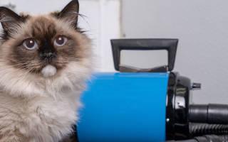 Популярные фены-компрессоры для сушки собак и кошек: типы, характеристики и описание